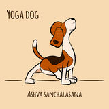 Cartoon dog shows yoga pose Ashva Sanchalasan Royalty Free Stock Image