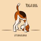 Cartoon dog shows yoga pose uttanasana - standing forward bend pose Royalty Free Stock Photo