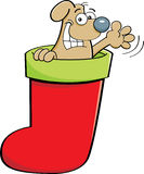 Cartoon dog in a stocking Royalty Free Stock Photo