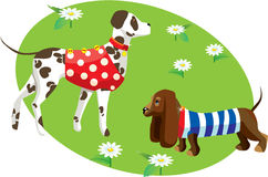 Cartoon of dogs in clothes Stock Images