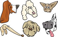 Cartoon dogs heads set Stock Images