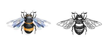 Cartoon and drawing bees. On a white background Royalty Free Stock Image