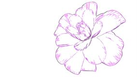 Cartoon drawn opening long blooming flower time-lapse animation isolated on background new quality beautiful holiday. Opening long blooming flower time-lapse 3d stock video