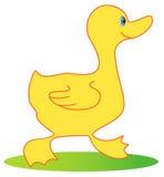 Cartoon duck Stock Image