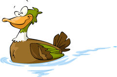 Cartoon duck Stock Images