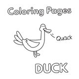 Cartoon Duck Coloring Book. Cartoon duck illustration. Vector coloring book pages for children Stock Photo