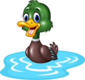Cartoon duck floats on water Stock Photos