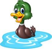 Cartoon duck floats on water Stock Photos