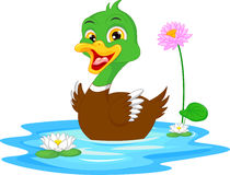 Cartoon duck swimming Stock Photos