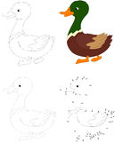 Cartoon duck. Vector illustration. Dot to dot game for kids Royalty Free Stock Photography