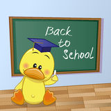 Cartoon Duck wrote in classroom Royalty Free Stock Photos
