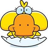 Cartoon Duckling Hatch Stock Images