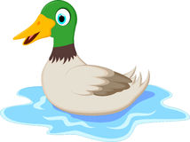 Free Cartoon Ducks On Water Royalty Free Stock Image - 69215296