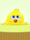 Cartoon easter chick in basket looking up Royalty Free Stock Images