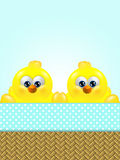 Cartoon easter chicks in basket looking up Stock Images