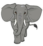 Cartoon elephant. Walking towards the viewer and looking up Stock Photography