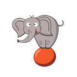 Cartoon elephant on a ball Stock Photography