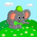 Cartoon elephant collects flowers in the meadow, vector illustration. Royalty Free Stock Photo