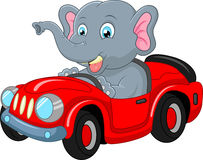 Cartoon elephant driving a car Stock Images