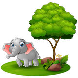 Cartoon elephant under a tree on a white background Stock Images