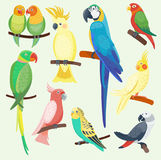 Cartoon exotic parrots set vector illustration wild animal birds zoo tropical fauna ara isolated Stock Photography
