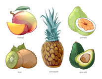 Cartoon exotic tropic fruits vector icons set. Cartoon exotic tropic fruits icons set. Pomelo mango pineapple kiwi, vector illustration Stock Photos
