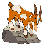 Cartoon farm animals for kids. Cute goaton the rock. Stock Images