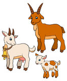 Cartoon farm animals for kids. Goat family. Royalty Free Stock Image