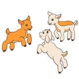 Cartoon farm animals for kids. Three baby goats. Royalty Free Stock Photos