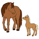 Cartoon farm animals. Mother horse with foal. Cartoon farm animals. Mother horse with her little cute foal Stock Photography
