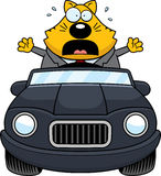 Cartoon Fat Cat Driving Panic Royalty Free Stock Photos