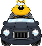 Cartoon Fat Cat Driving Surprised Stock Images