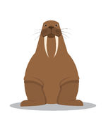 Cartoon fat walrus with big tusks. Vector illustration Stock Photo