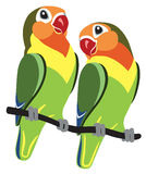 Cartoon Fischer lovebirds. Pair of cartoon parrots Fischer lovebirds agapornis isolated on white Royalty Free Stock Photos