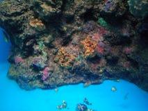 Cartoon fish in the aquarium at the Samut Sakorn Aquarium. Royalty Free Stock Image
