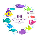 Cartoon fish collection background. Fish collection. Cartoon style. Illustration of different fish Stock Photography