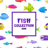 Cartoon fish collection background. Fish collection. Cartoon style. Illustration of different fish Stock Images