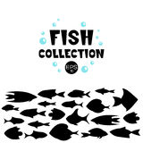 Cartoon fish collection background. Fish collection. Cartoon style. Illustration of twelve different fish Royalty Free Stock Photography