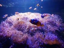 Cartoon fish 1 stock photo