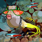 Cartoon fish glamor glasses. Cartoon fish with glamor glasses in water Royalty Free Stock Photos