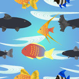 Cartoon fish seamless pattern. Tropical fishes Royalty Free Stock Image