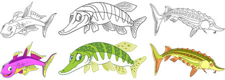 Cartoon fishes set. Cartoon underwater animals set. Collection of fishes. Furcata rainbowfish, pike fish, sturgeon. Coloring book pages for kids Stock Image