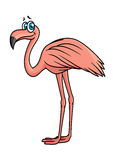 Cartoon flamingo bird character Stock Photos