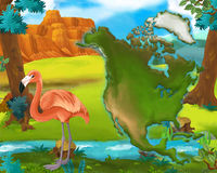 Cartoon flamingo with continent map Stock Photography