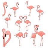 Cartoon flamingo vector illustration isolated on a white background. Cartoon flamingo set vector illustration isolated on a white background stock illustration