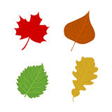 Cartoon flat autumn leaves on white background. Vector illustrat Royalty Free Stock Photos