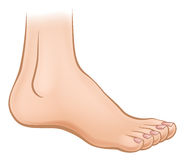 Cartoon Foot Royalty Free Stock Photography