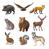 Cartoon Forest Animals Set. With wild boar owl fox lynx bear deer hair squirrel wolf isolated vector illustration Stock Photo