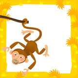 Cartoon frame - wildlife - ape. Happy and colorful illustration for the children Royalty Free Stock Photography