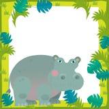 Cartoon frame - wildlife - hippo Stock Photos